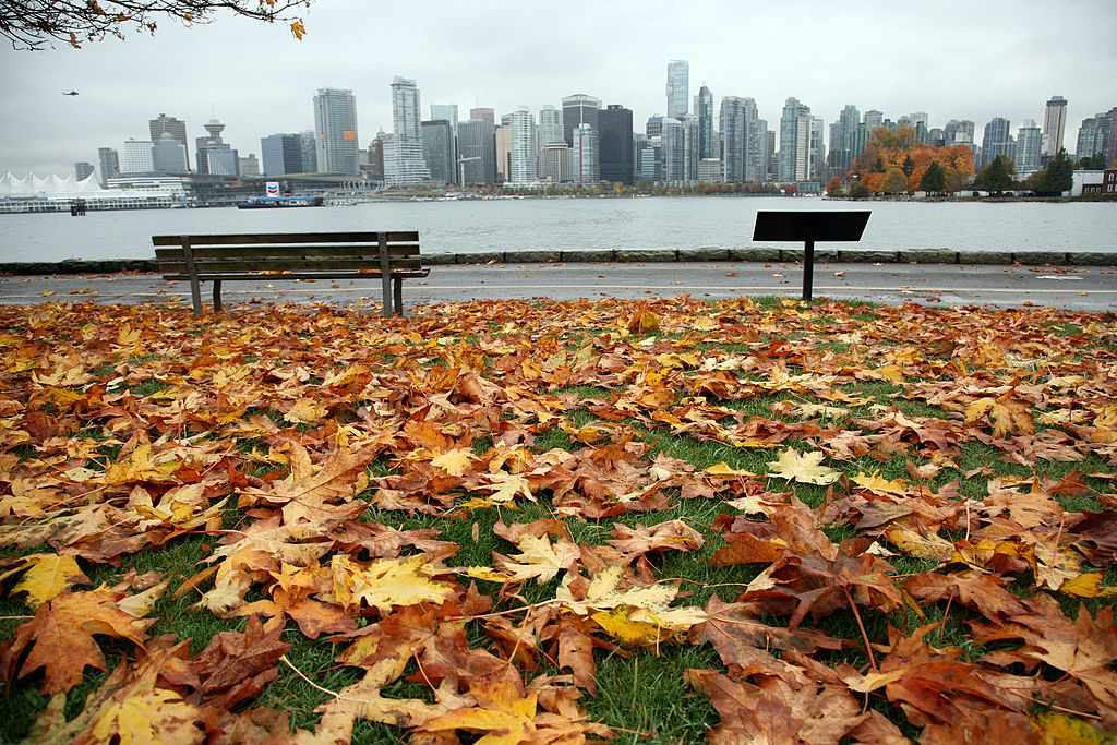 Leaves on the ground looking at Vancouver skyline