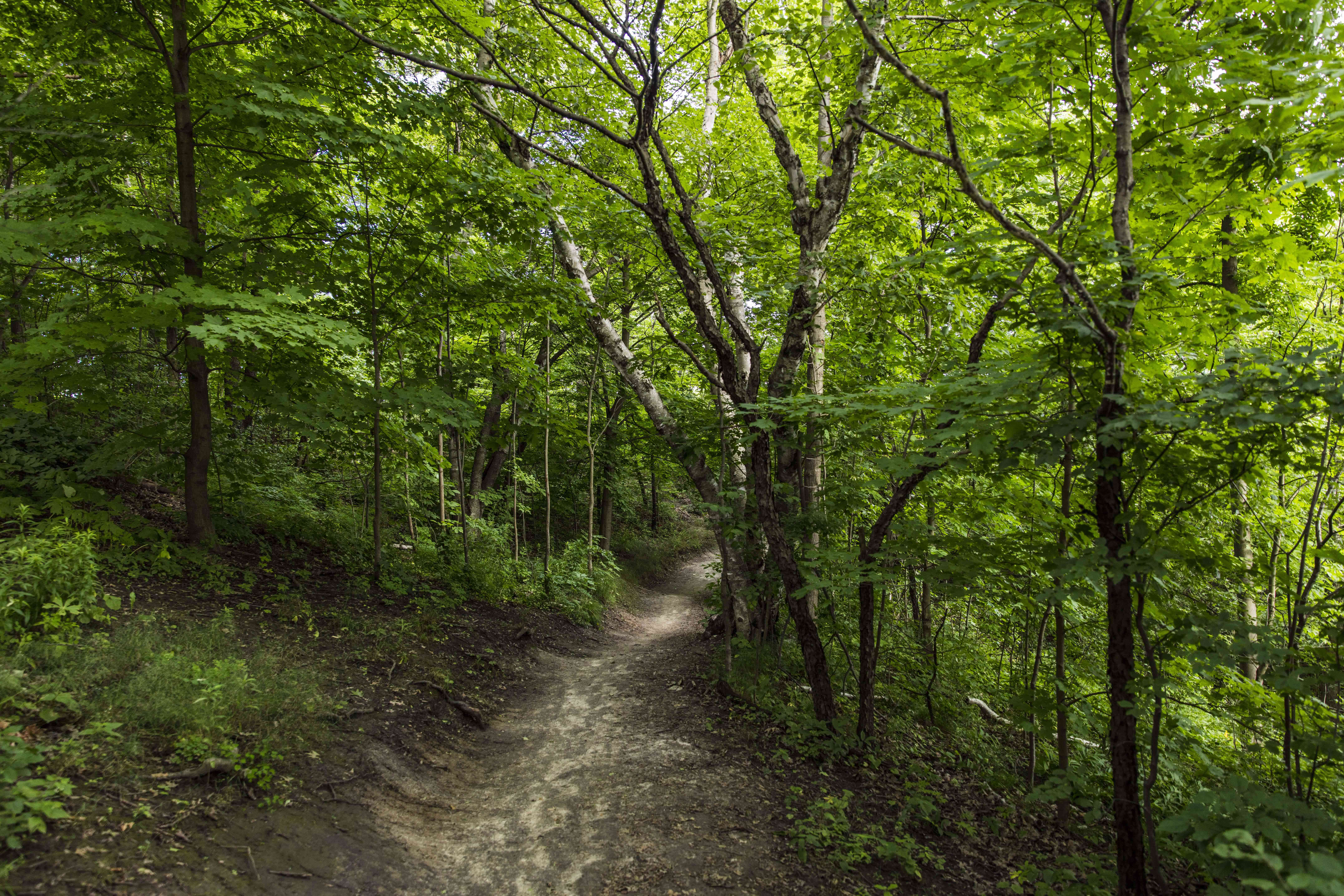 Crothers Woods in Toronto