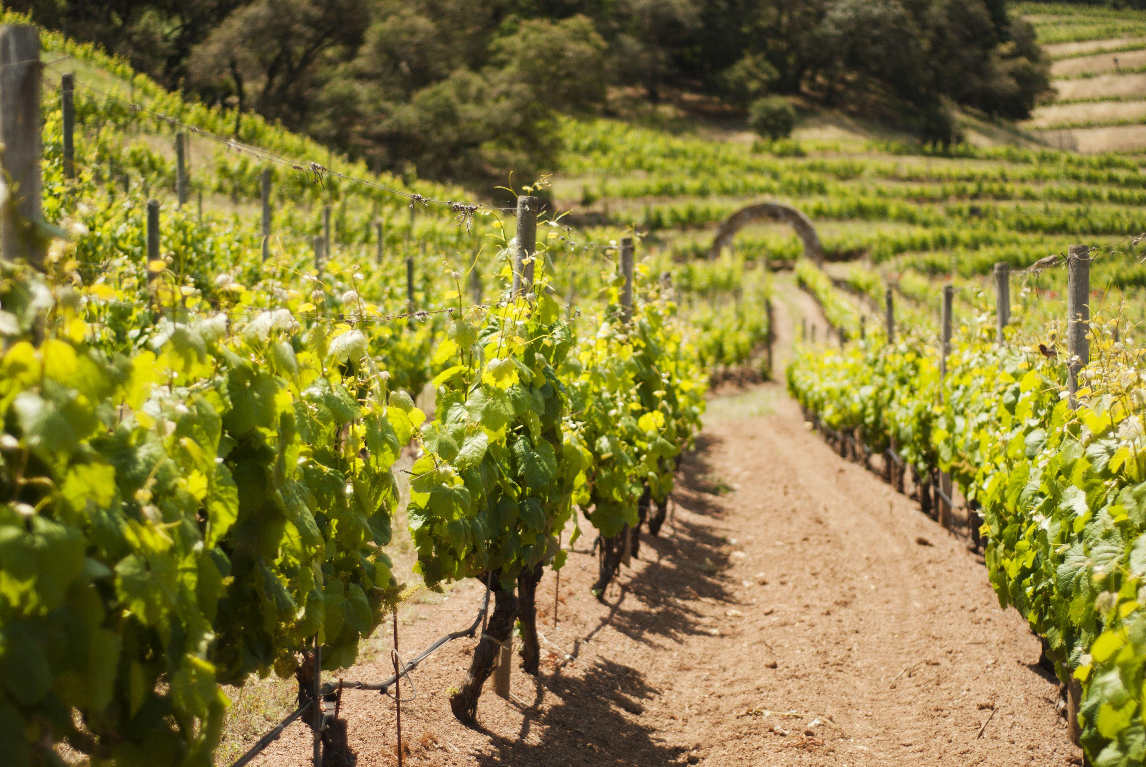 Napa Valley Wine Country Vineyard