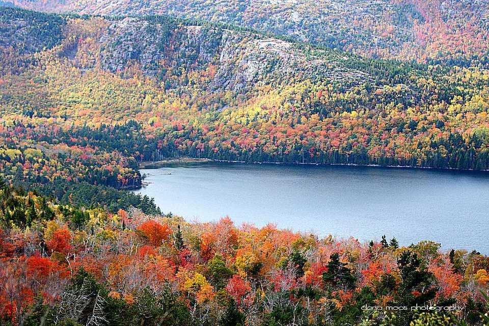 Autumn Foliage in Acadia National Park, Maine