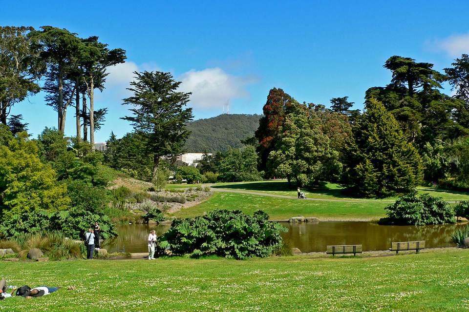The Great Lawn at San Francisco Botanical Garden