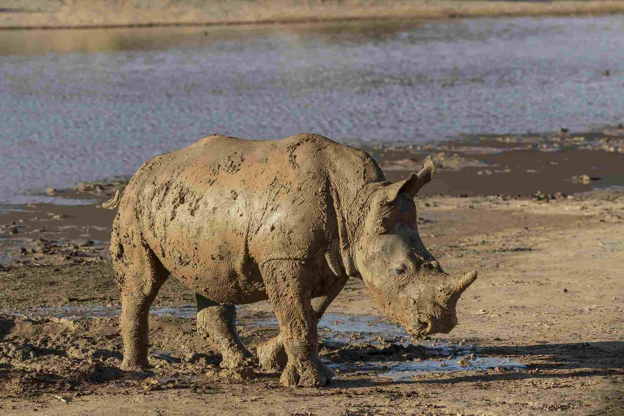 Aquila Private Game Reserve, Western Cape, South Africa