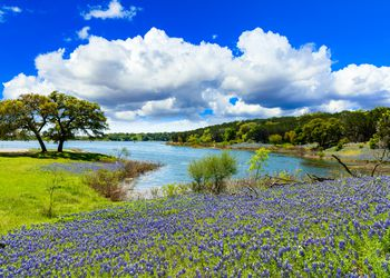 Beautiful bluebonnets along a lake in the Texas Hill Country.
