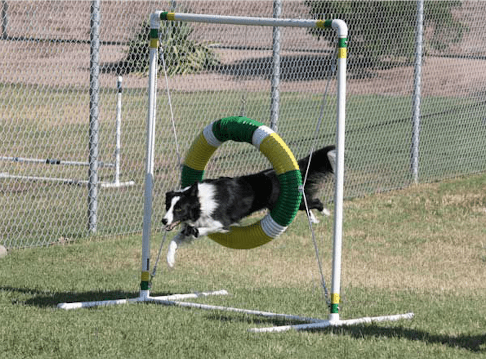 If you live in the Greater Phoenix area, chances are there's a dog park within 20 minutes of your home where you can take your dog for a romp off leash. These are fenced dog parks. Keep in mind that dog park configurations may change from time to time, as will the amount of grass in the park depending on the season and maintenance of the dog park. You can find a description of the dog parks, as well as dog park rules, here. To locate a dog park near you, use this zoomable map of Greater Phoenix dog parks. If you live in the Greater Phoenix area, chances are there's a dog park within 20 minutes of your home where you can take your dog for a romp off leash. These are fenced dog parks. Keep in mind that dog park configurations may change from time to time, as will the amount of grass in the park depending on the season and maintenance of the dog park. To locate a dog park near you, use this zoomable map of Greater Phoenix dog parks