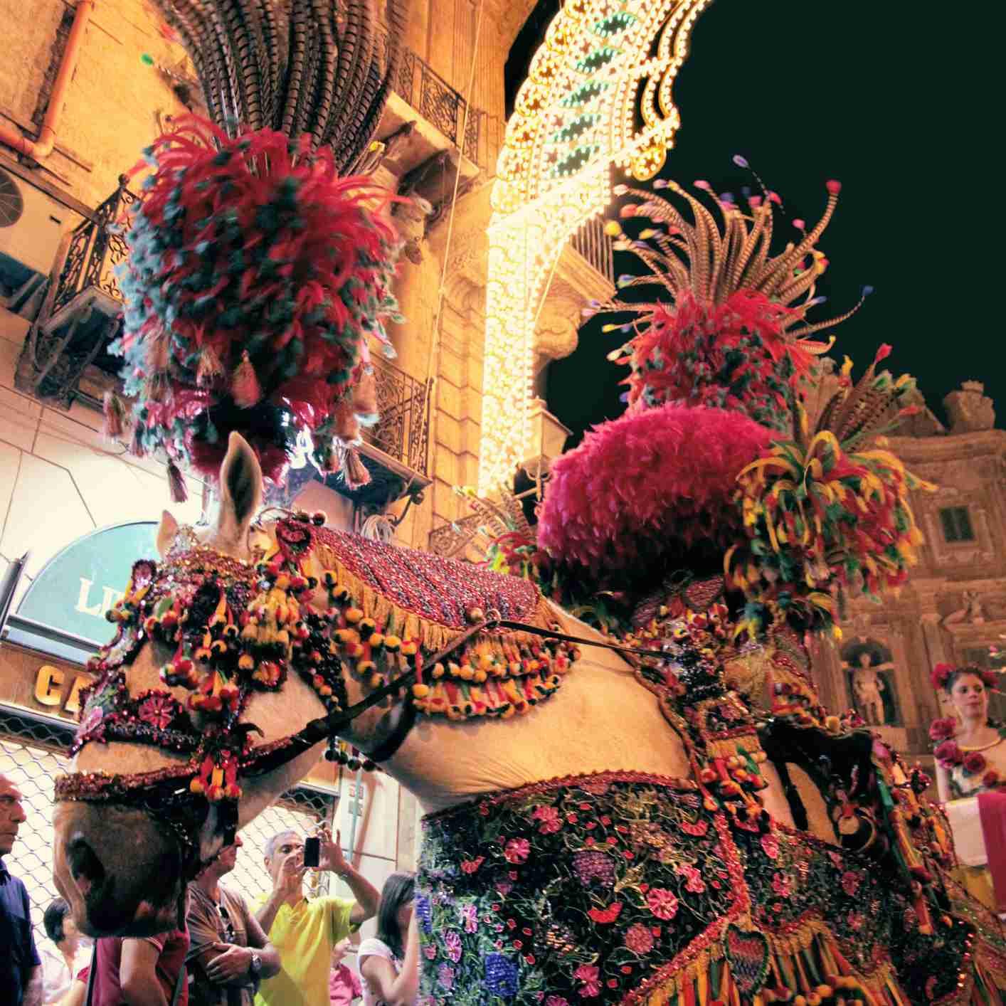 Decorated horse at the Santa Rosalia Feast Palermo