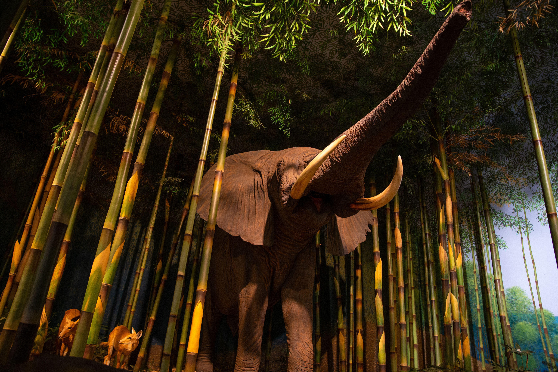 elephant statue in the Milwaukee Public Museum