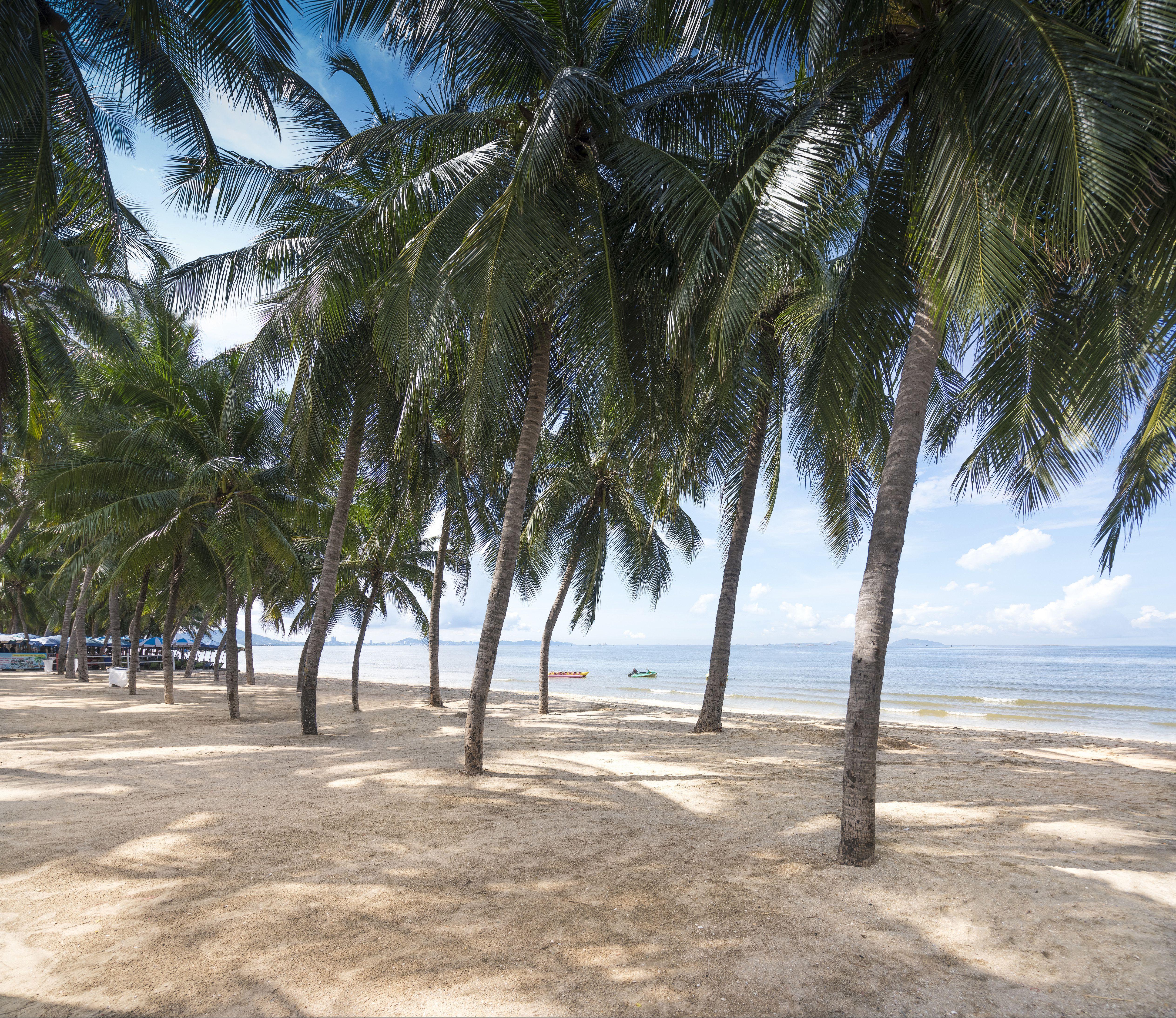 palm trees on Bang Saen Beach near Bangkok