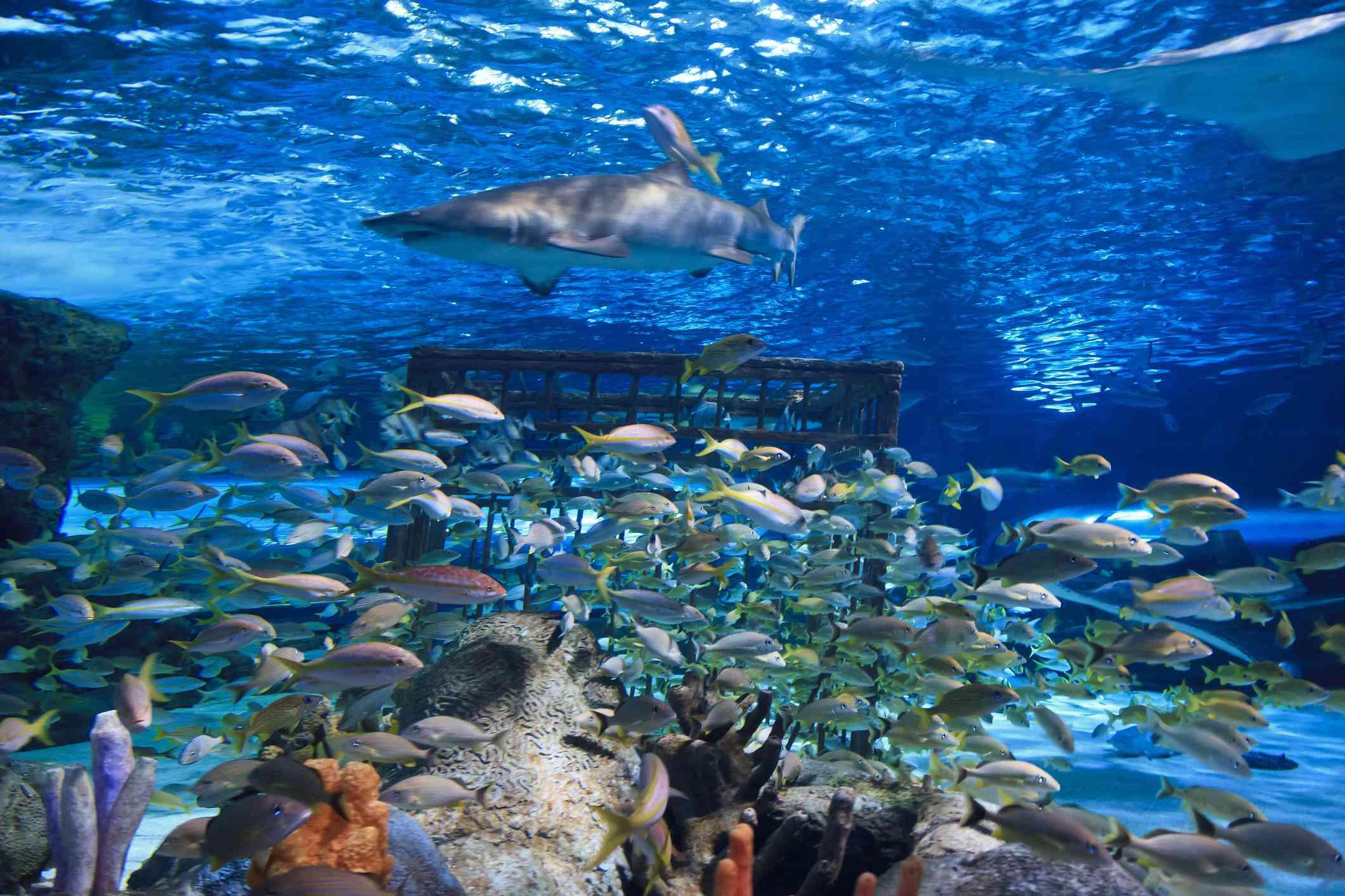 SC Aquarium