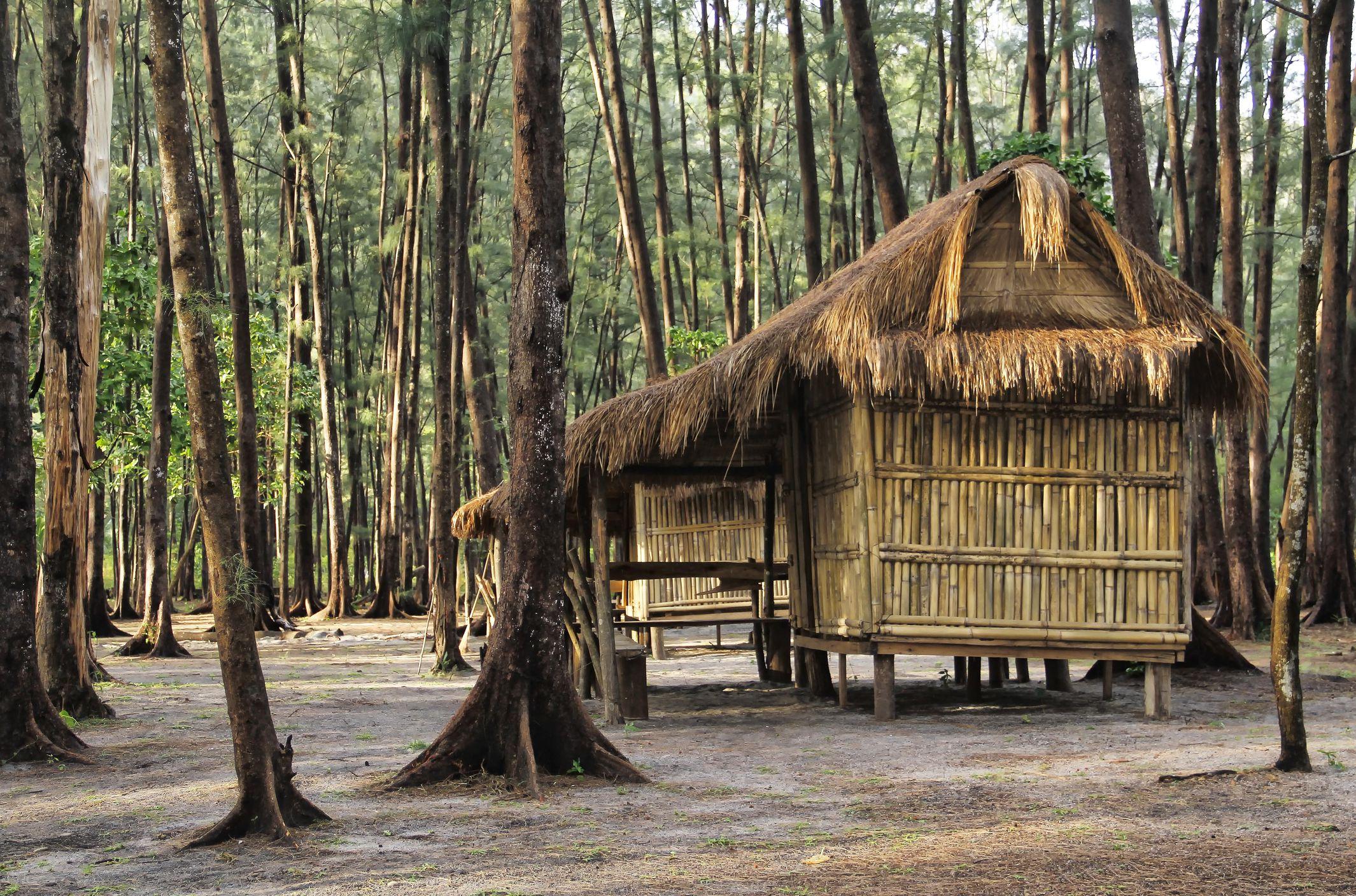 Hut amidst Anawangin casuarina trees