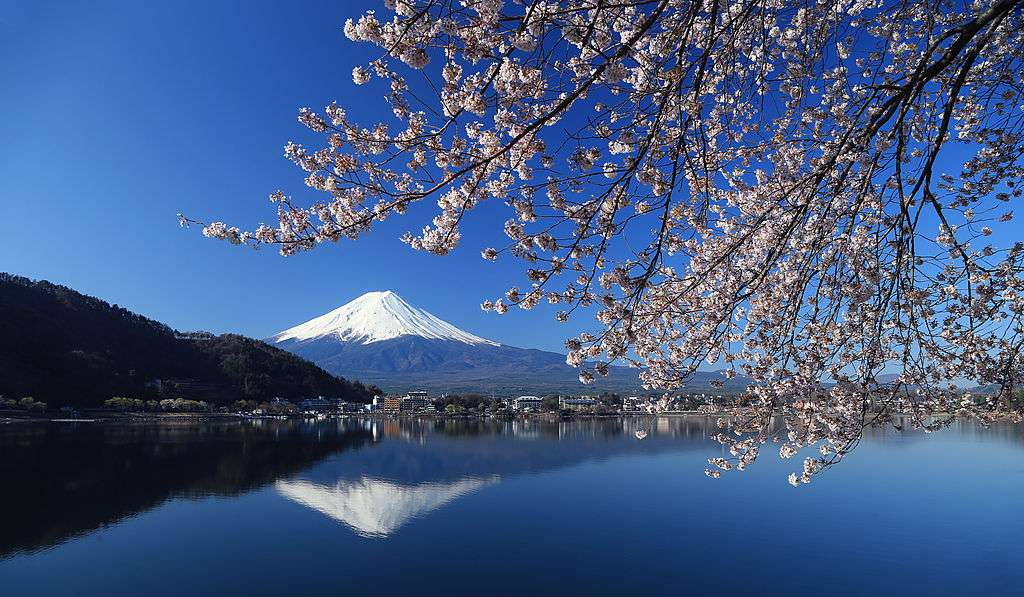 Mount Fuji with Cherry Blossoms in the foreground