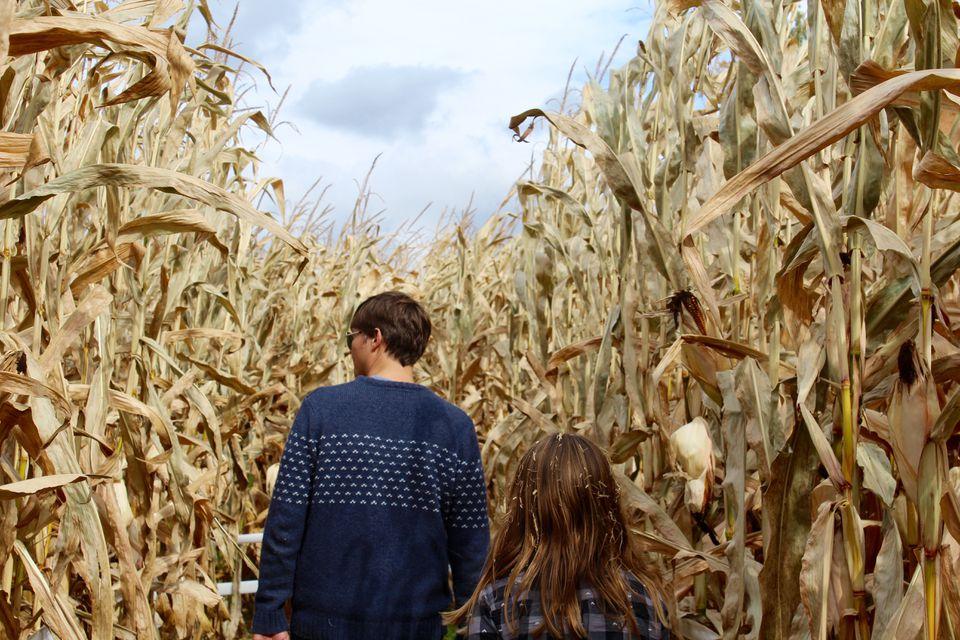 Through the Corn Maze