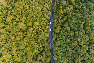 Long road cutting through Waitakere ranges regional park, Auckland, New Zealand.