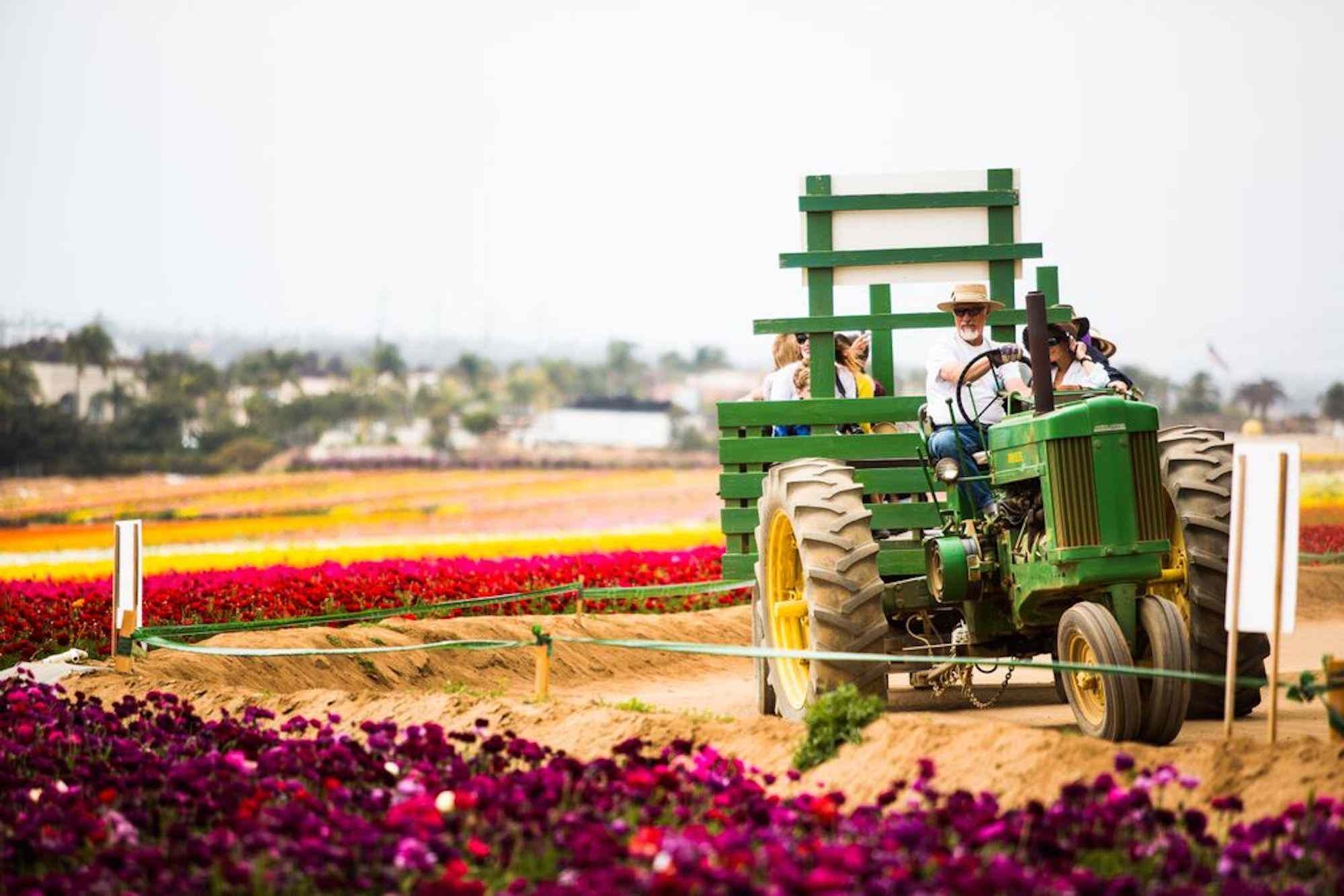 Wagon ride at The Flower Fields