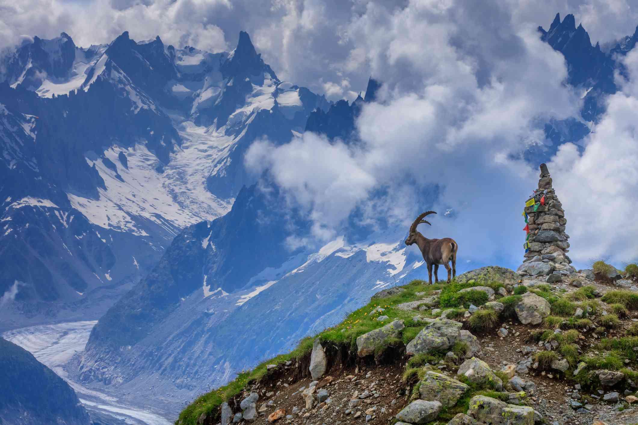 Ibex, Range of Mont-Blanc, French Alps