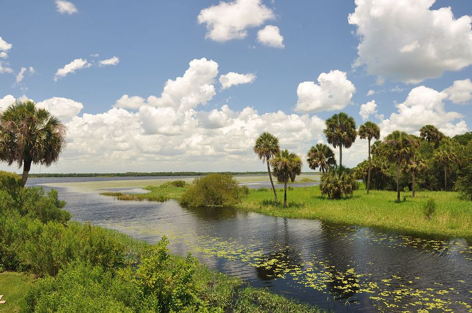 Looking toward the Myakka river Florida