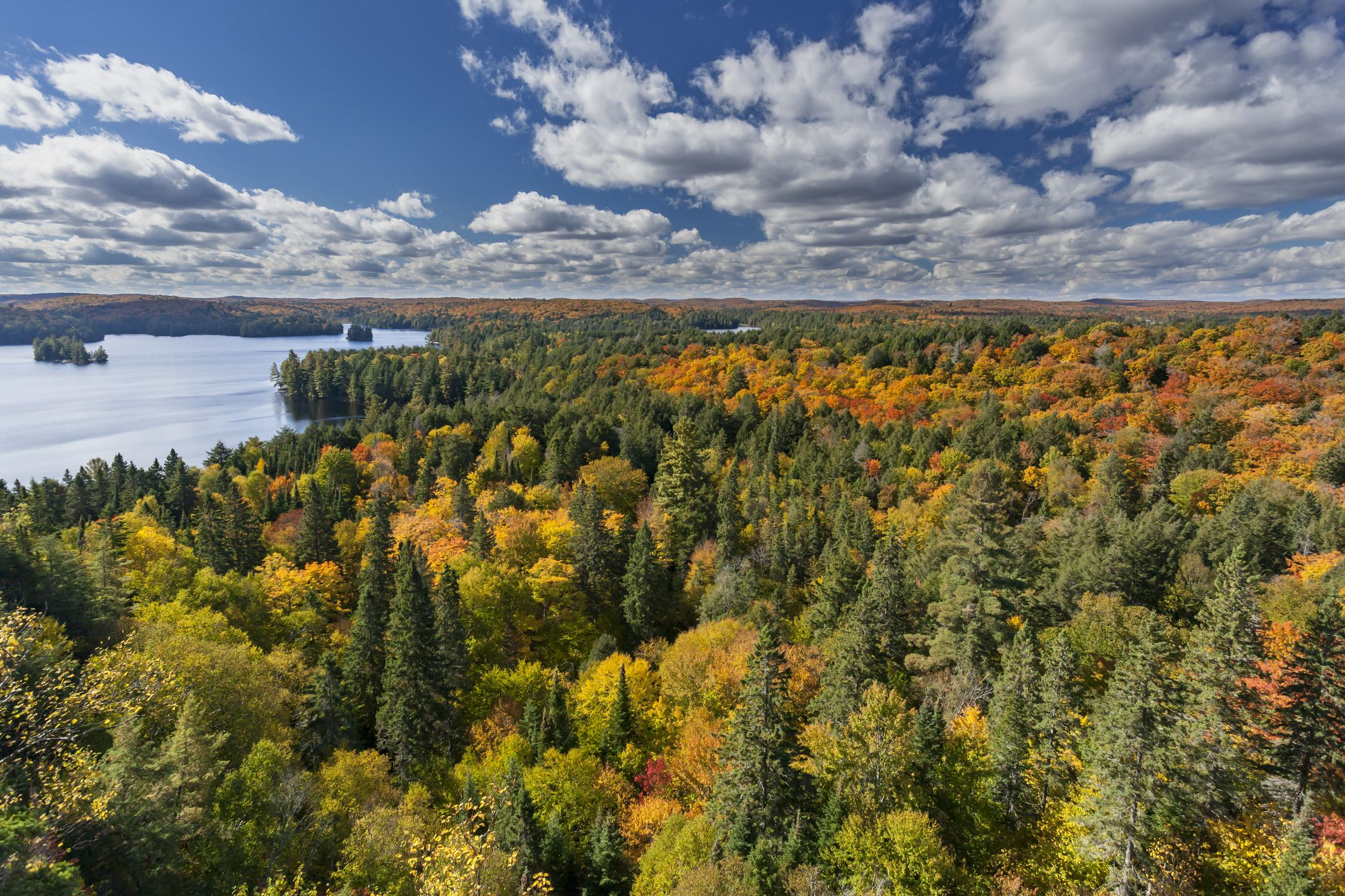 Looking out over Cache Lake in Algonquin Park in the autumn.