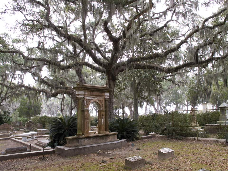 Tombstone under tree covered in Spanish moss, Bonaventure Cemetery, Savannah, Georgia