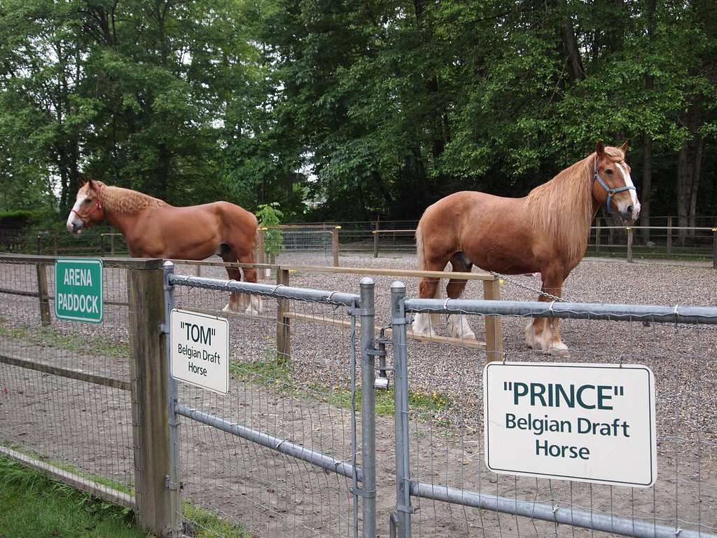 Horses at Maplewood Farm, Vancouver