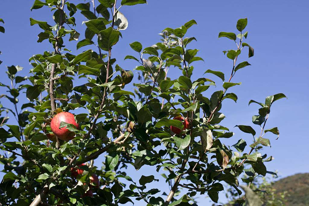 Vermont Apple Orchard