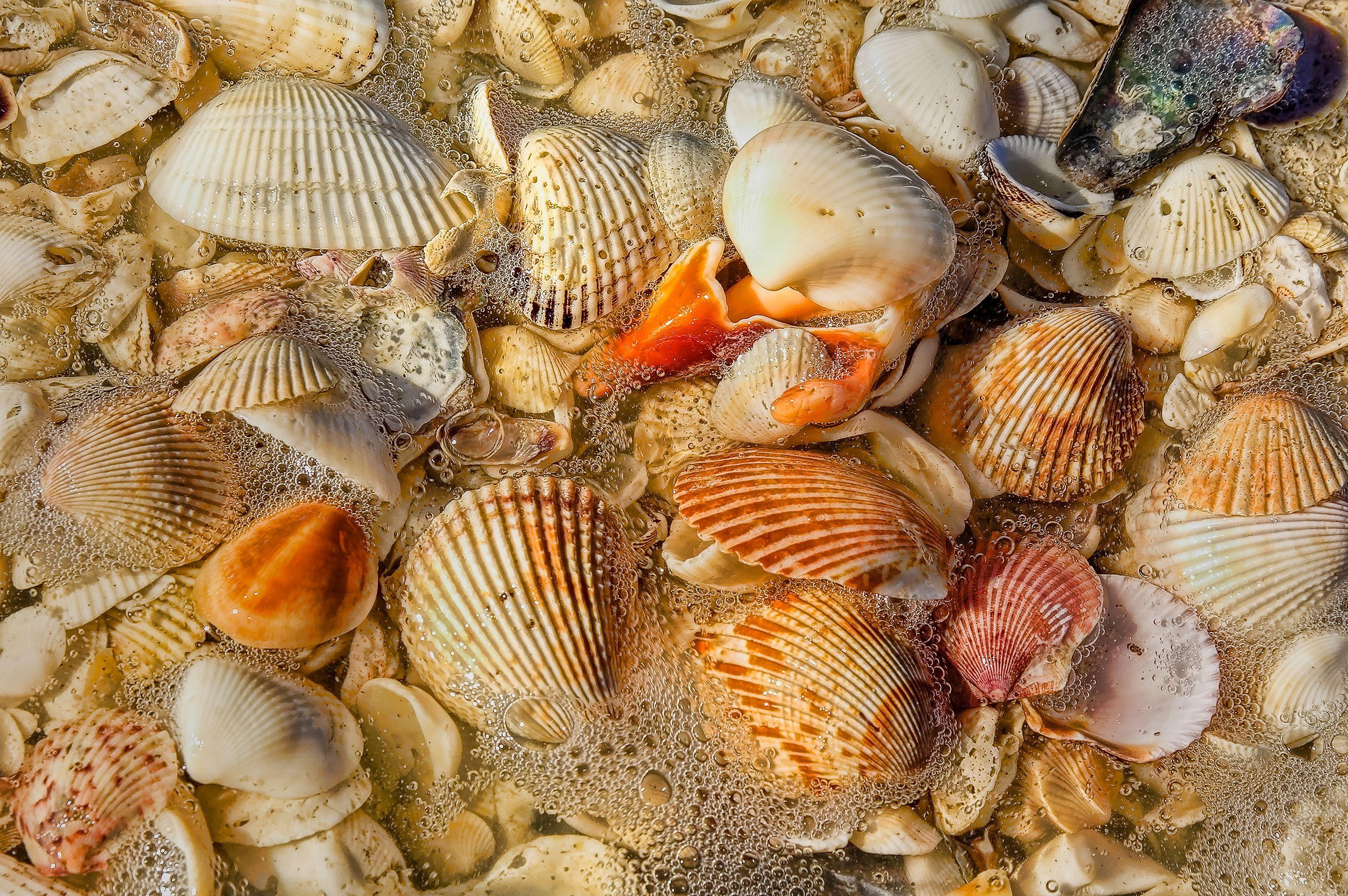 Sea shells after the wave, Sanibel Island, Florida
