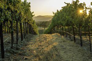 Jordan Winery estate in Sonoma