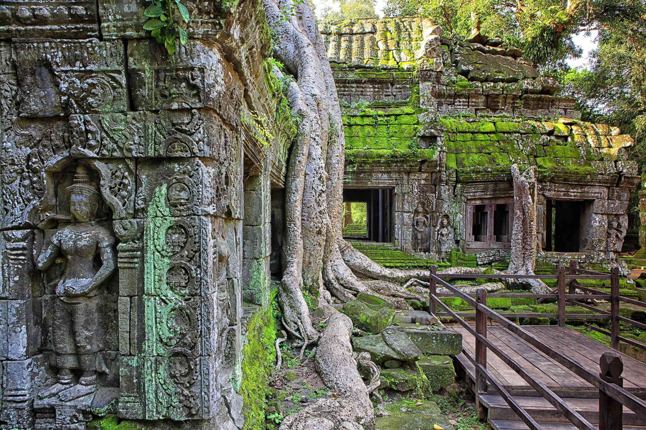 Ta Phrom Temple and gigantic trees and roots