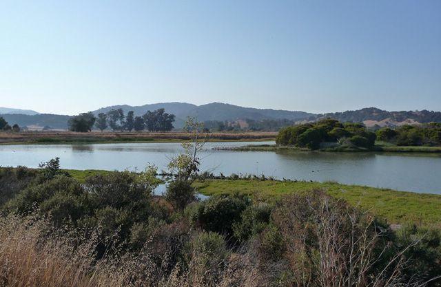 Las Gallinas Wildlife Ponds
