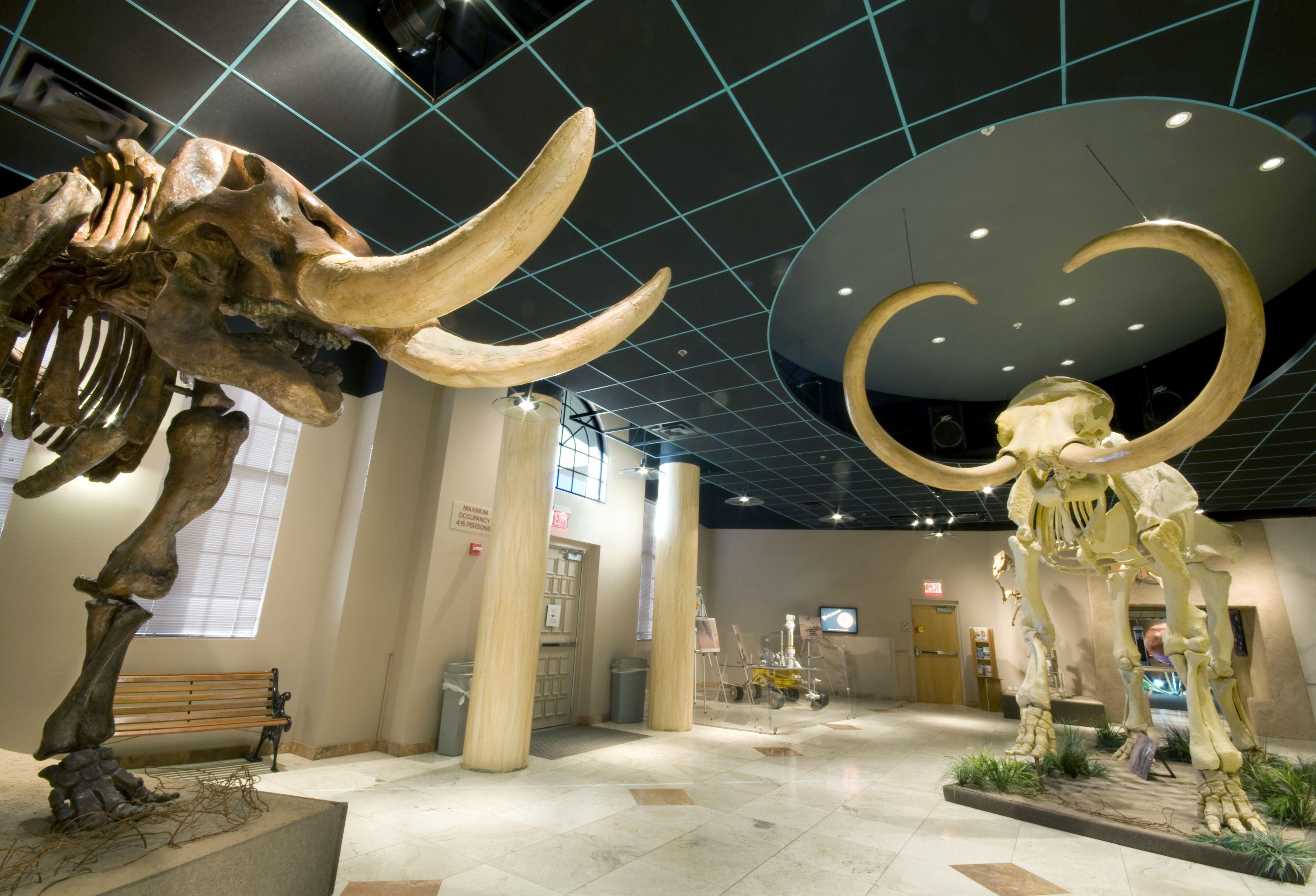 The Arizona Museum of Natural History