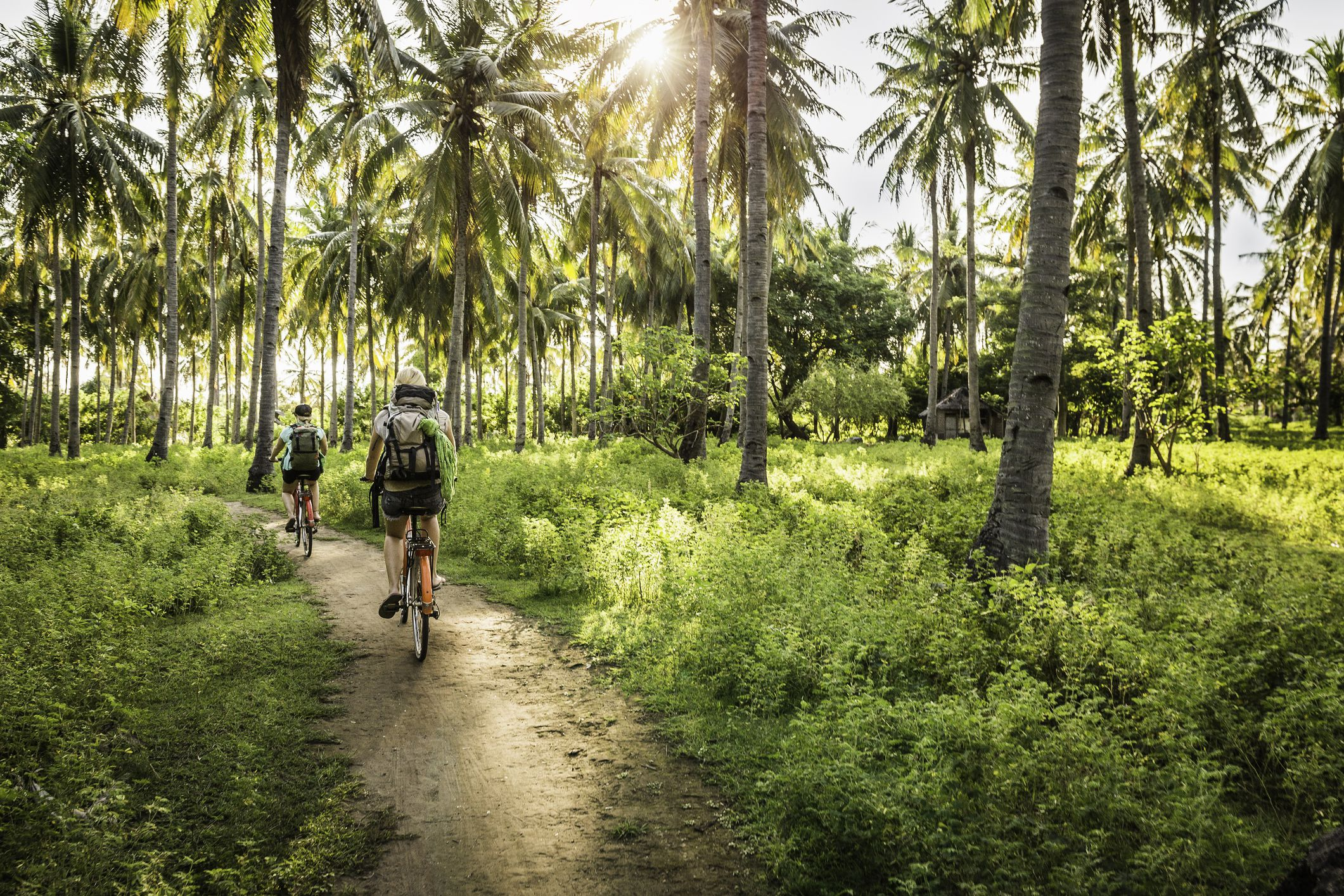 Cycling in palm tree forest, Gili Meno, Lombok, Indonesia