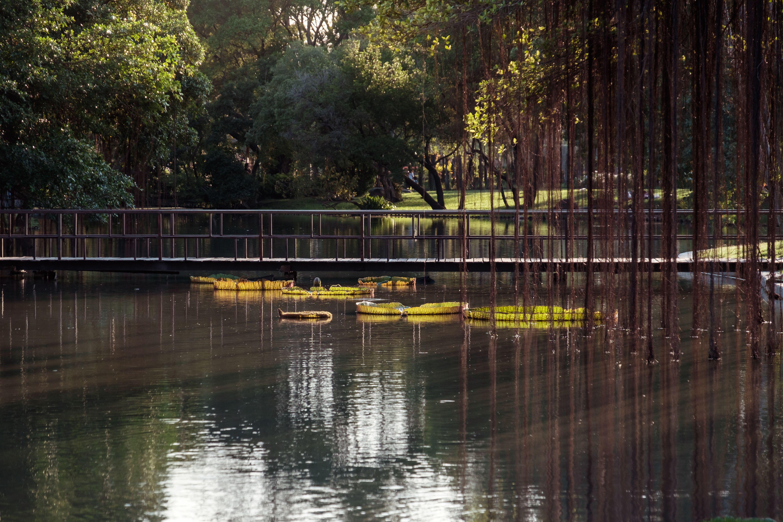 Pantano en el parque con puente de madera