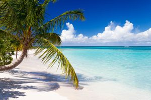 Palm trees on a Puerto Rico beach
