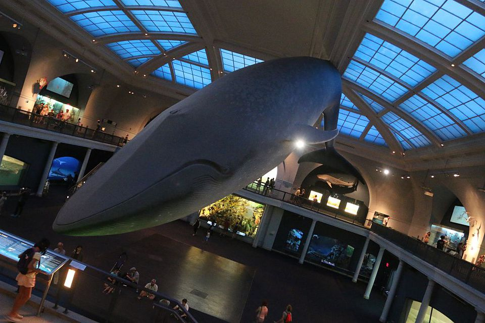 American Museum of Natural History tickets & more info