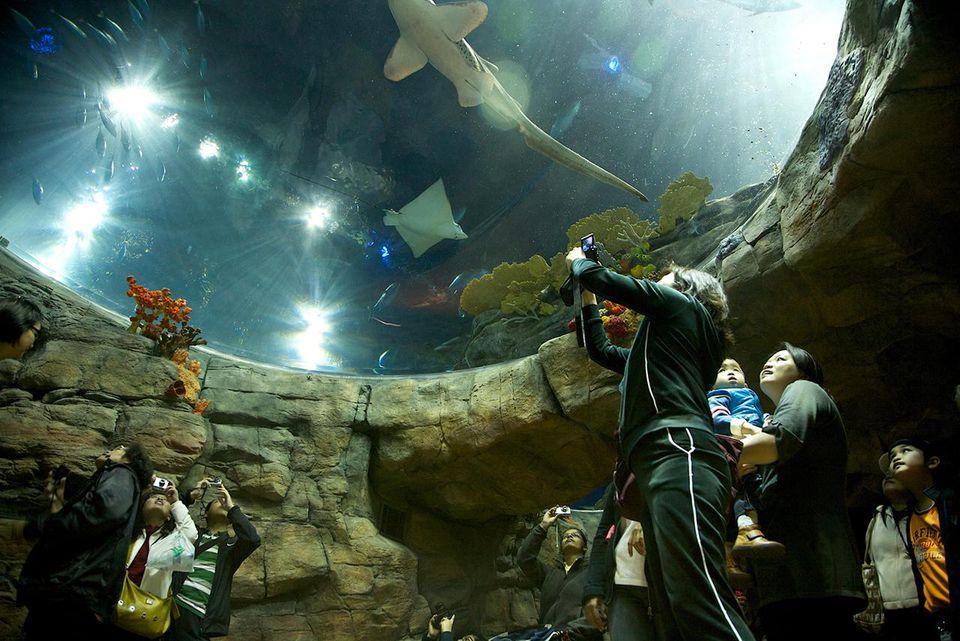 Los visitantes pueden ver una amplia gama de animales oceánicos en el acuario de Ocean Park.