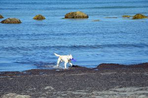 Your dog will feel like a puppy again when you vacation in a fabulous New England place like Block Island.