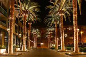Palm Row in San Jose CA