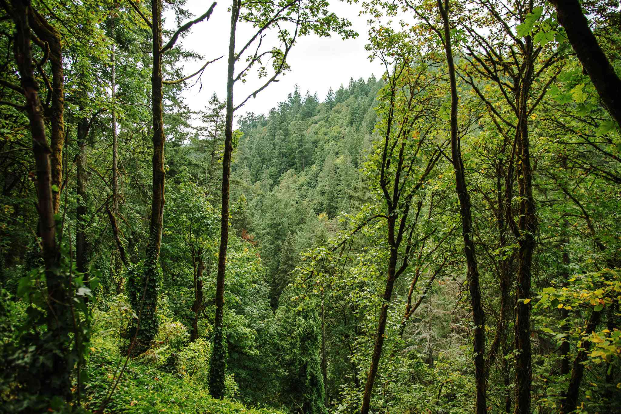 A view through lush trees