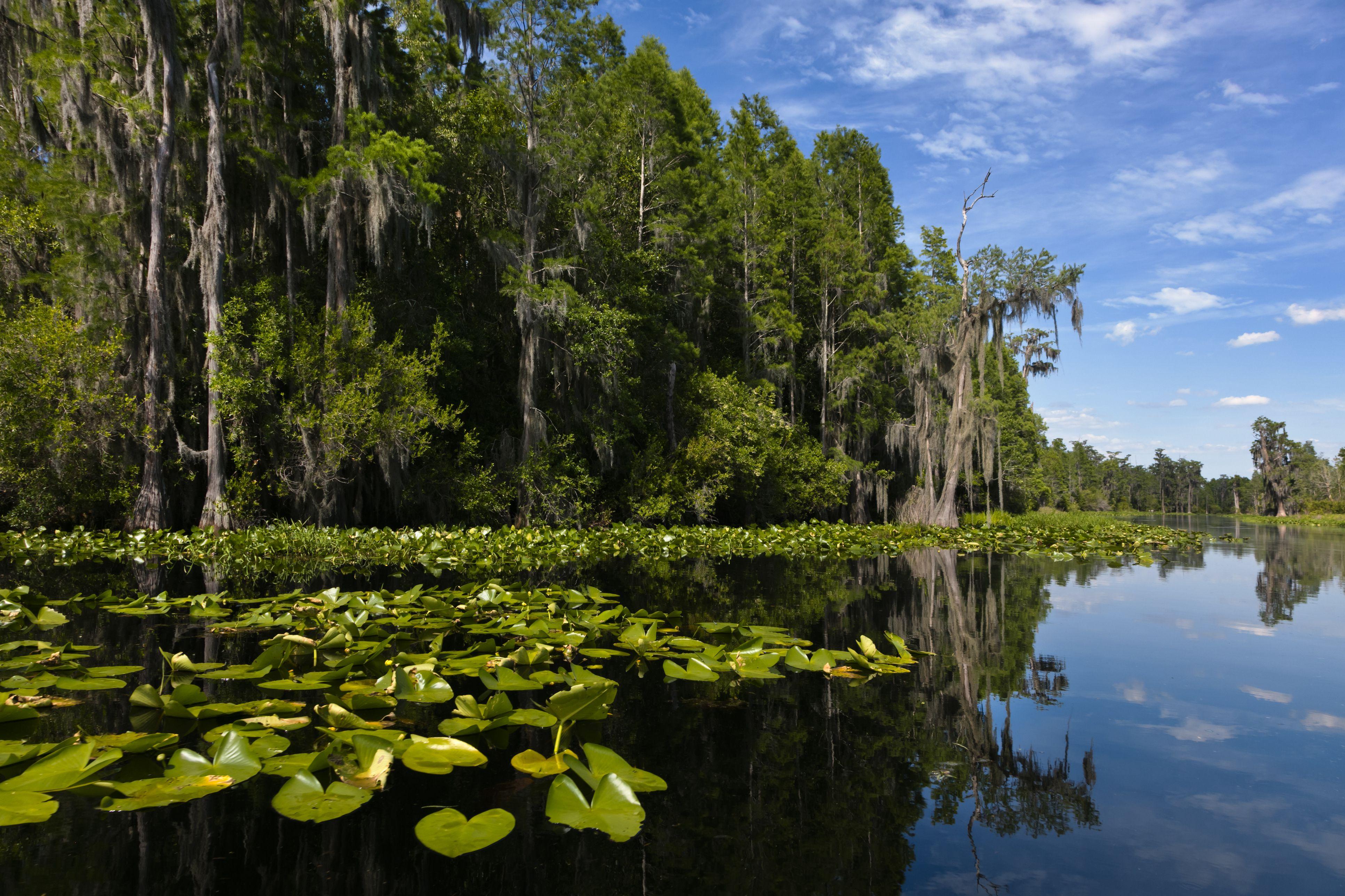 Okefenokee Swamp - Florida