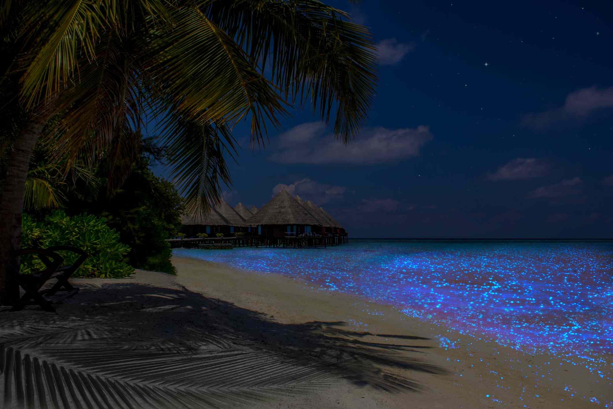 Fluorescent plankton in the Maldives