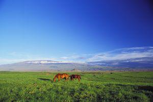 Parker Ranch, Waimea, Big Island of Hawaii