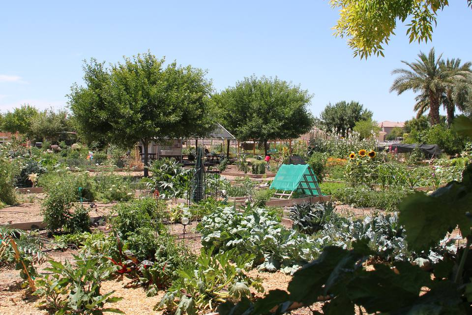 Travel in Arizona: Agritourism and Ecotourism