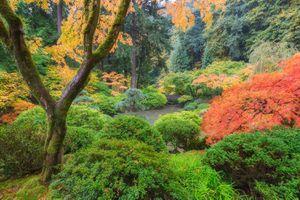 Autumn colors in Portland's Japanese Garden