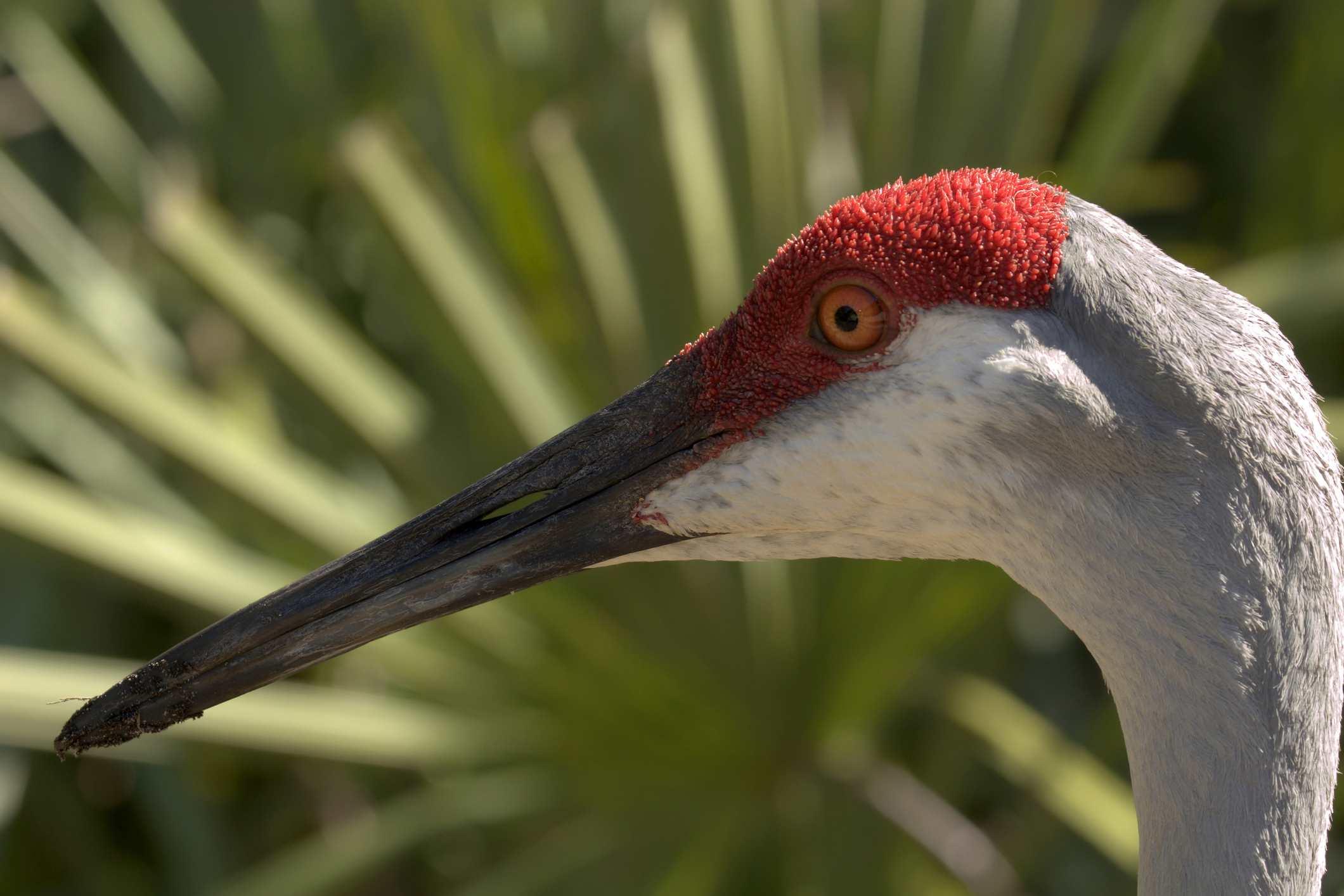 Okeeheelee Nature Center West Palm Beach