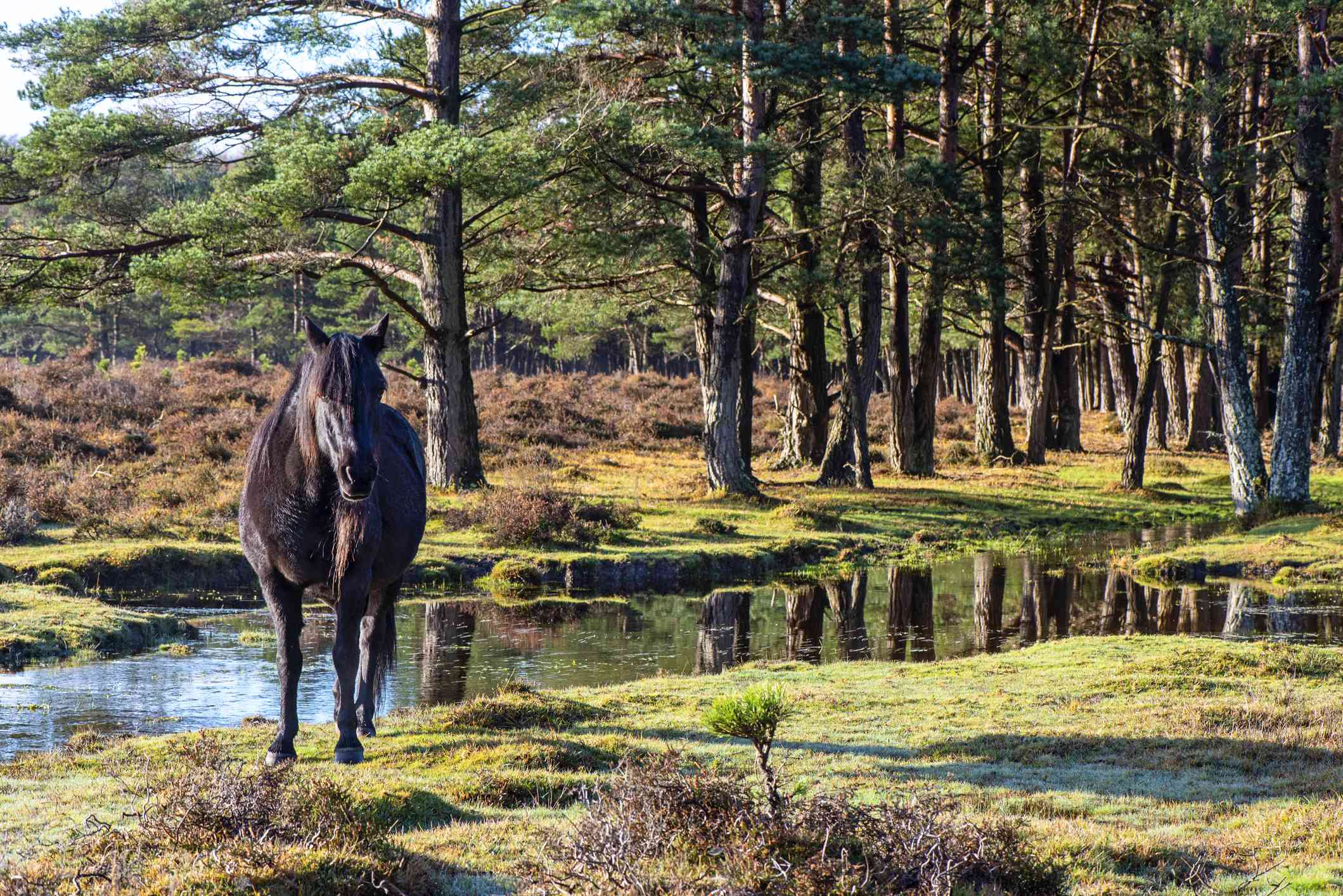 New Forest England