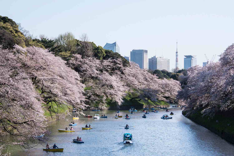Sakura at Tokyo Chidorigafuchi