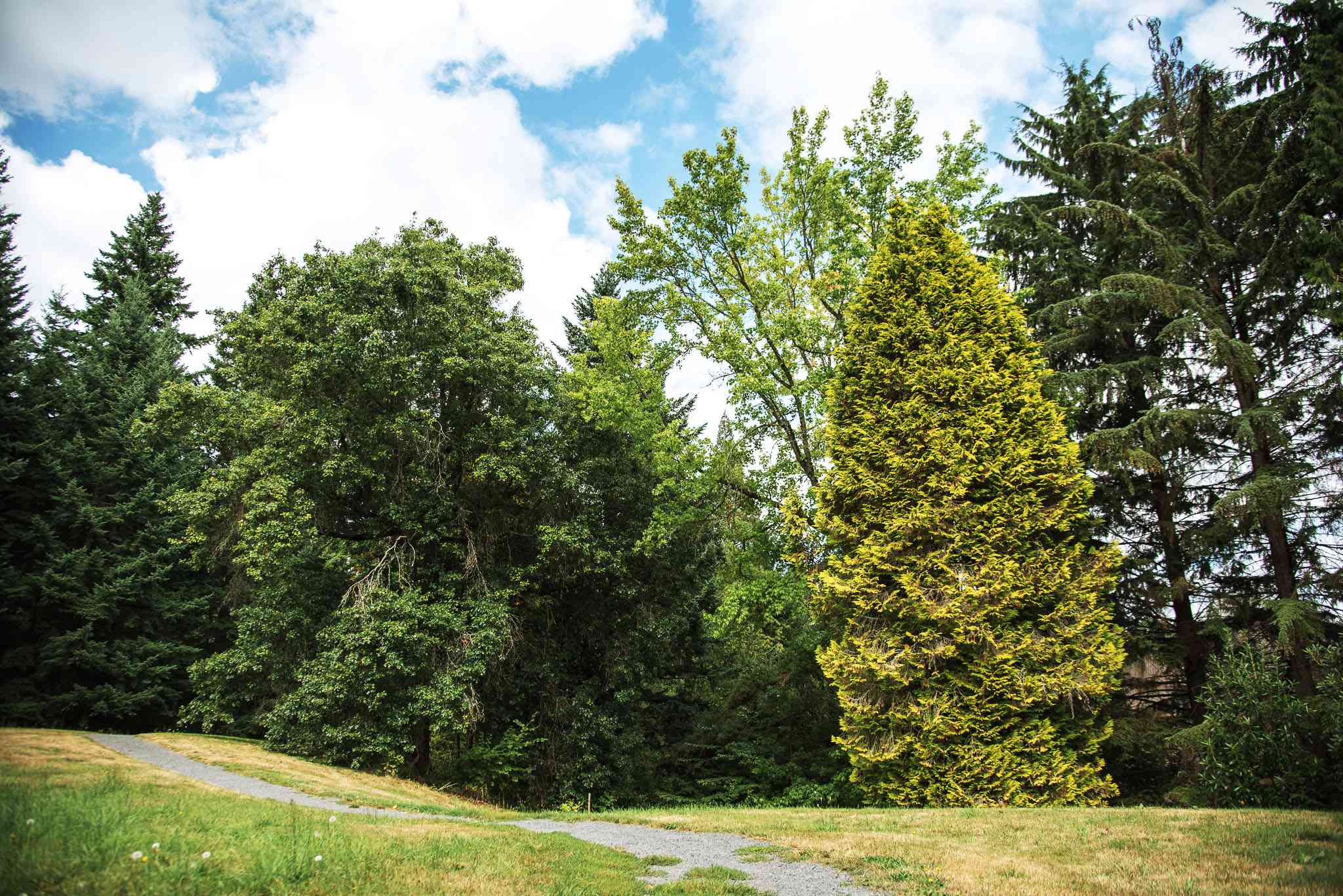 Altos árboles verdes en Forest Park