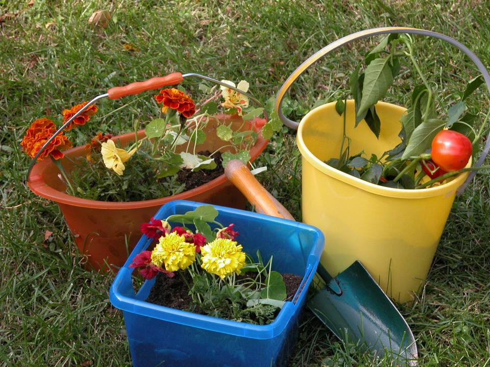 Garden in a Bucket