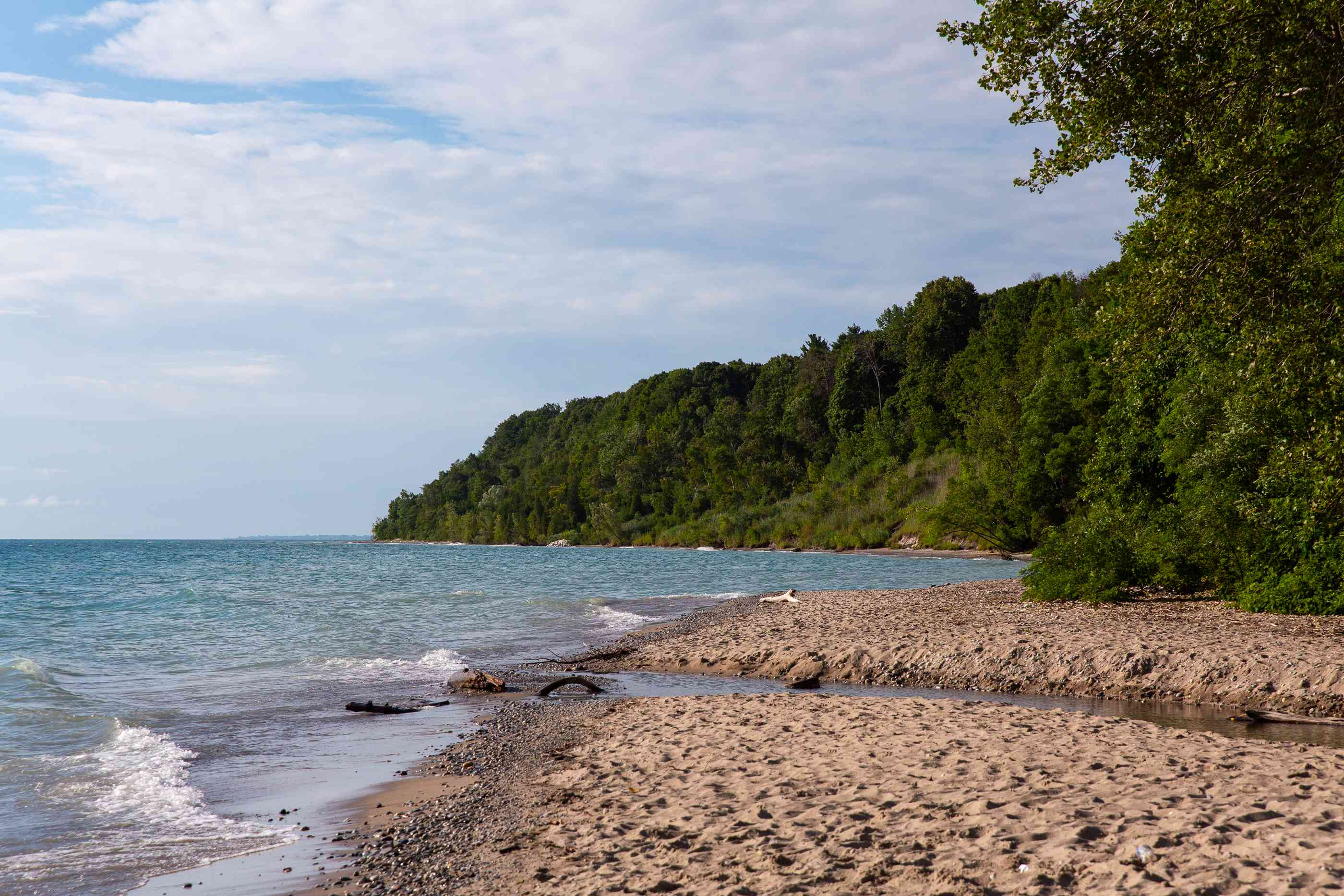 An empty beach surrounded by green trees