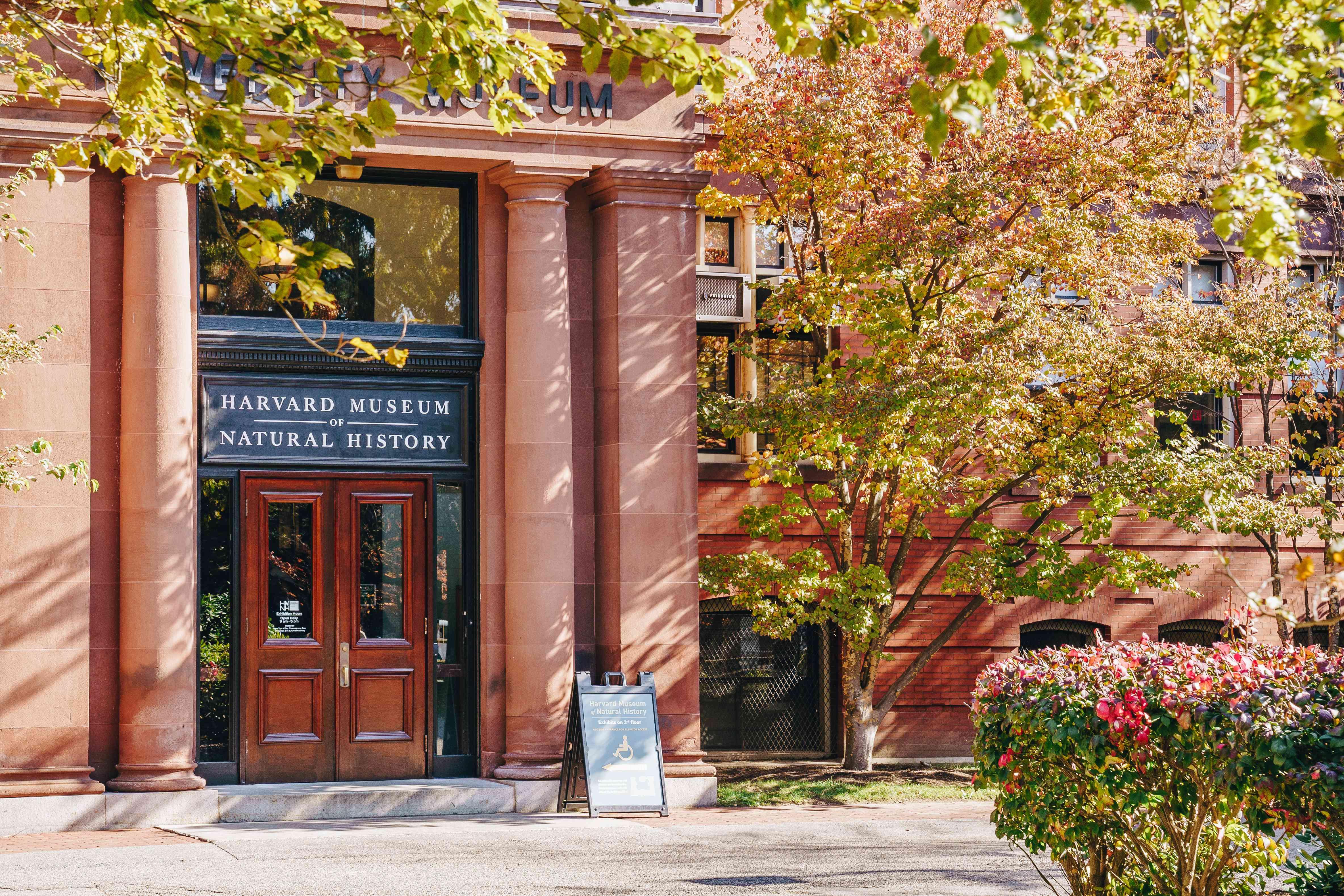 Harvard Museum of Natural History in Boston
