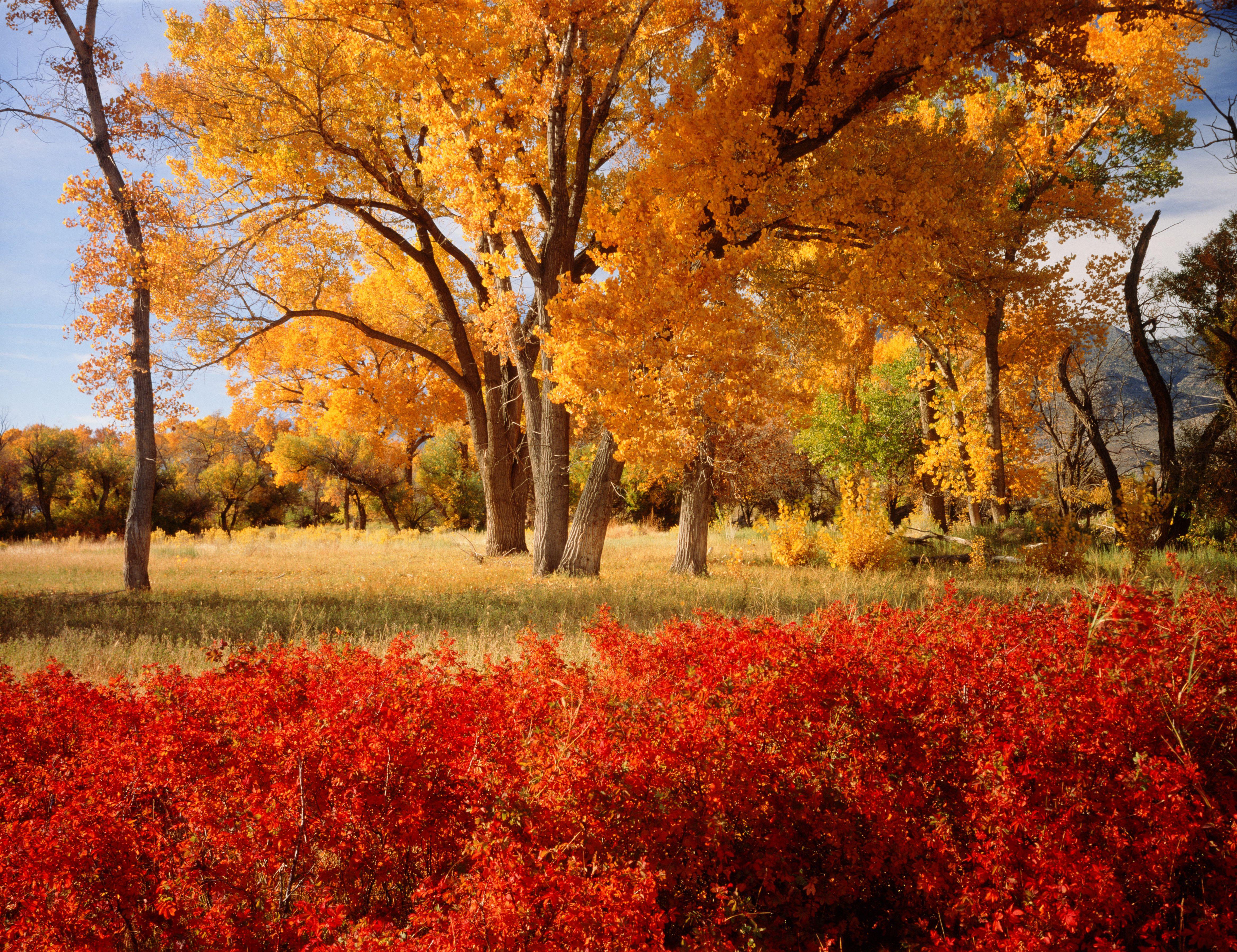Fall Foliage Fremont, California