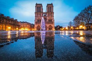 Christmas tree in Notre Dame de PAris